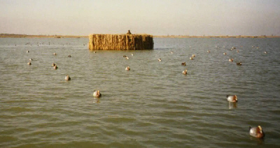 Benvenuti in la caccia agli uccelli acquatici for Giostre usate