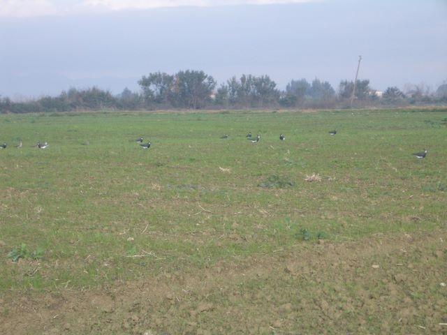 Benvenuti in la caccia agli uccelli acquatici for Rinfoltire il prato