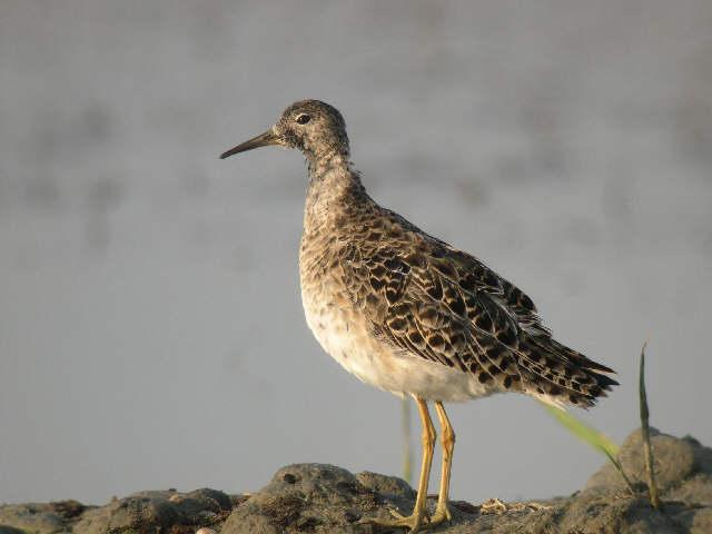 Benvenuti in ANATIDI.it - Le specie di uccelli acquatici